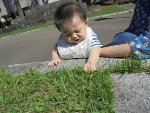 赤ちゃんも草に興味深々! あれ?抜けないぞ…?