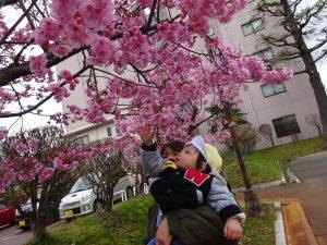 やさしく桜にも触ってみたよ