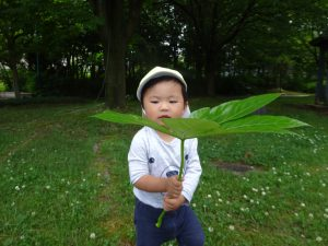 こ~んな大きな葉っぱを見つけたよ! トトロの傘みたいだね