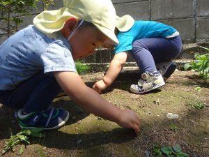 山本記念公園には虫さんが いっぱいいるんだよね~ 『ダンゴムシさんみーつけた!』