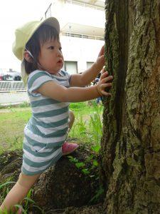 大きな木の幹にアリさん発見! 『ねえねえ、どこ行くの~?』