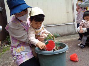 次はトマトを植えるよ!